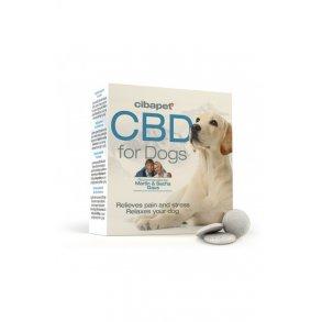 Cannabisolje og piller til dyr